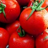 トマトジュースで咳や喘息の症状が改善する? 駆け込みドクター