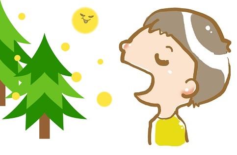 Cedar pollen1