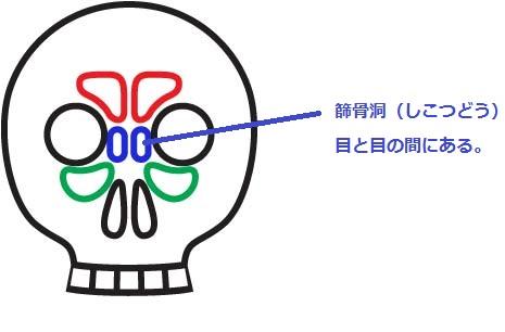 Paranasal sinuses2